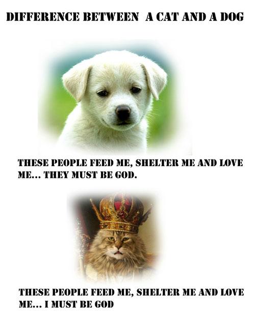 Diferencia-perros-gatos